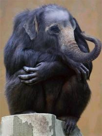 xxelephantchimpanze