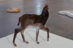 xx coq à l'âne