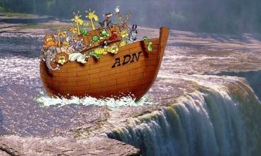 Noé 40