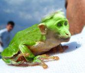 xx grenouchimpanze