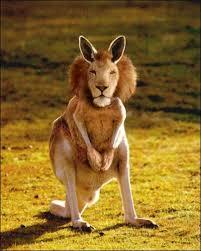xx-kangoulion