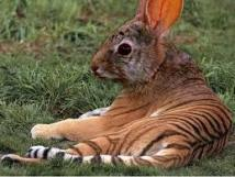 xx-tigrepin